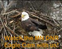 MN DNR Eagle Cam - 2017